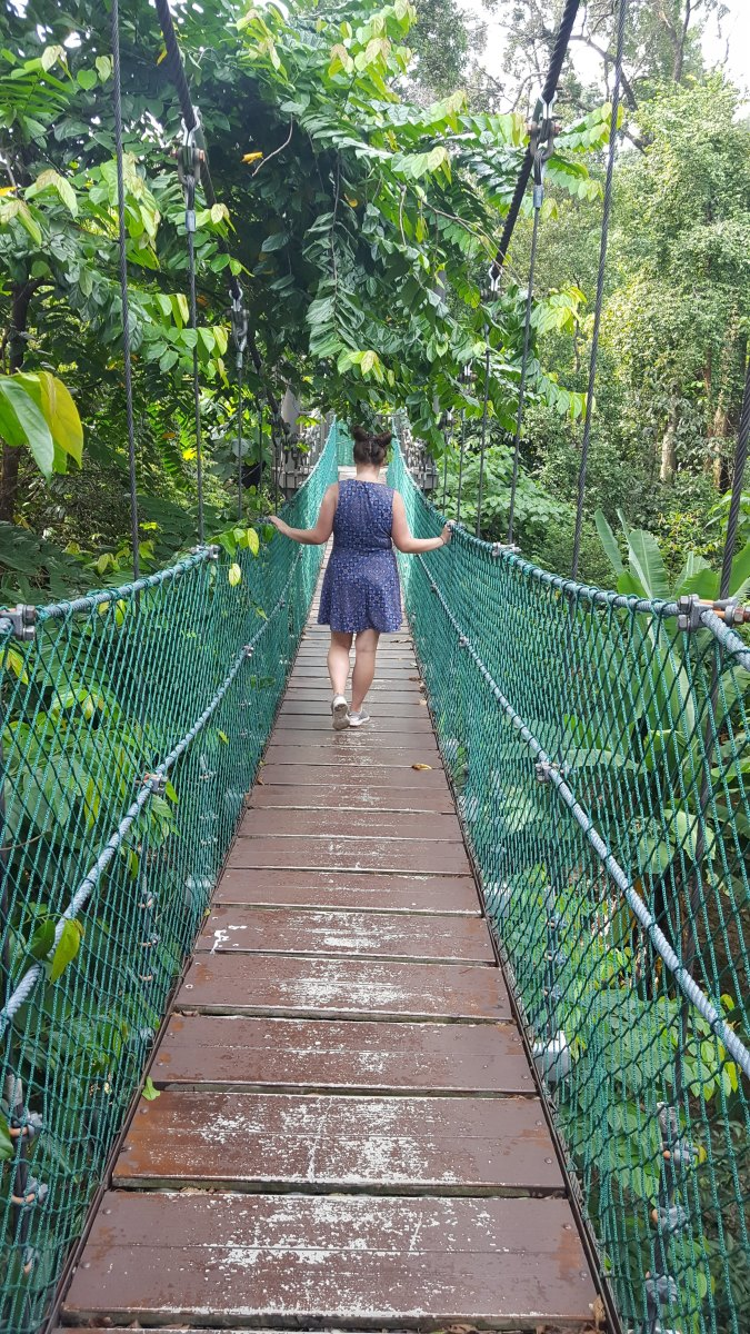 Walking the treetop canopy of KL Eco Park.