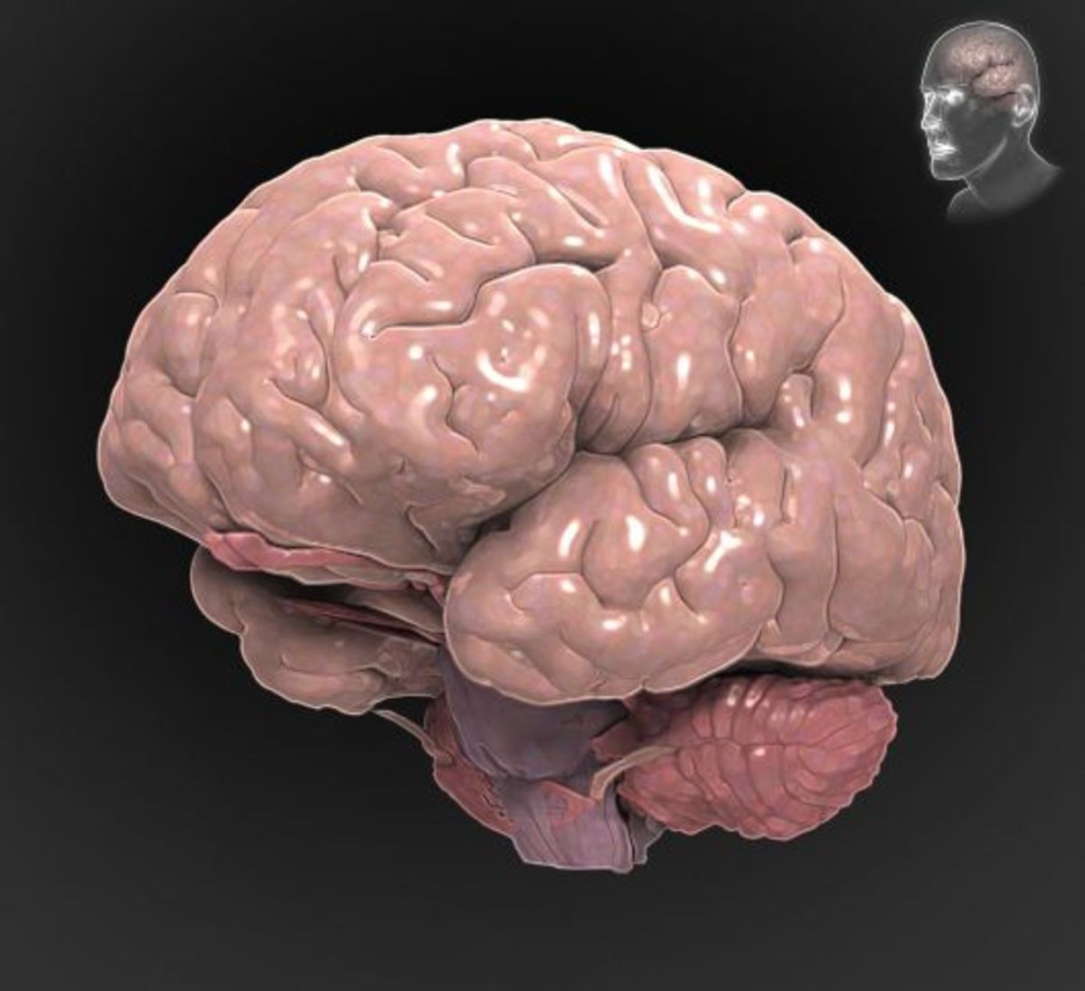 Traumatic Brain Injury A to Z - Interactive Brain.