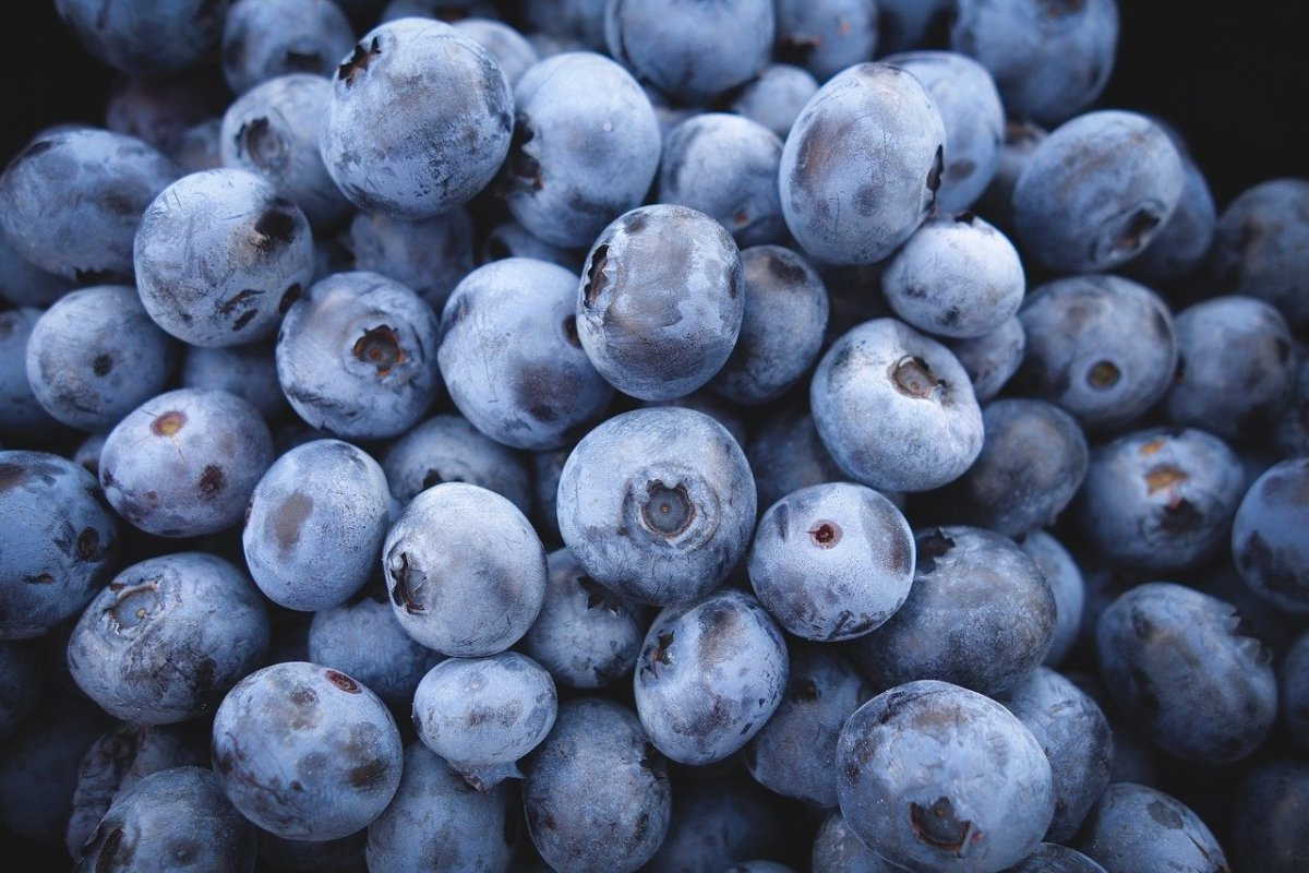 how-to-grow-blueberries-in-the-south