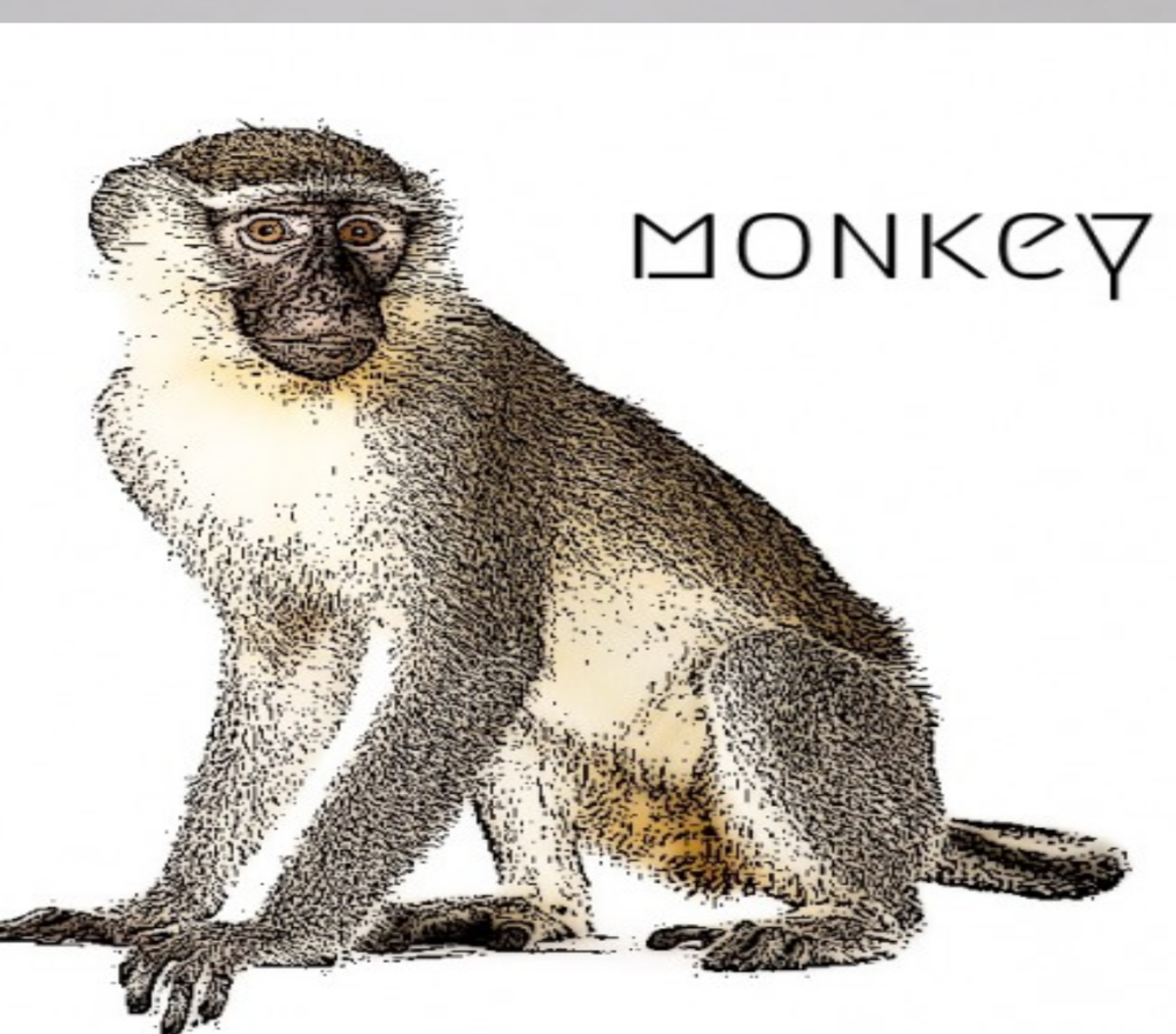Year of the Monkey 2021