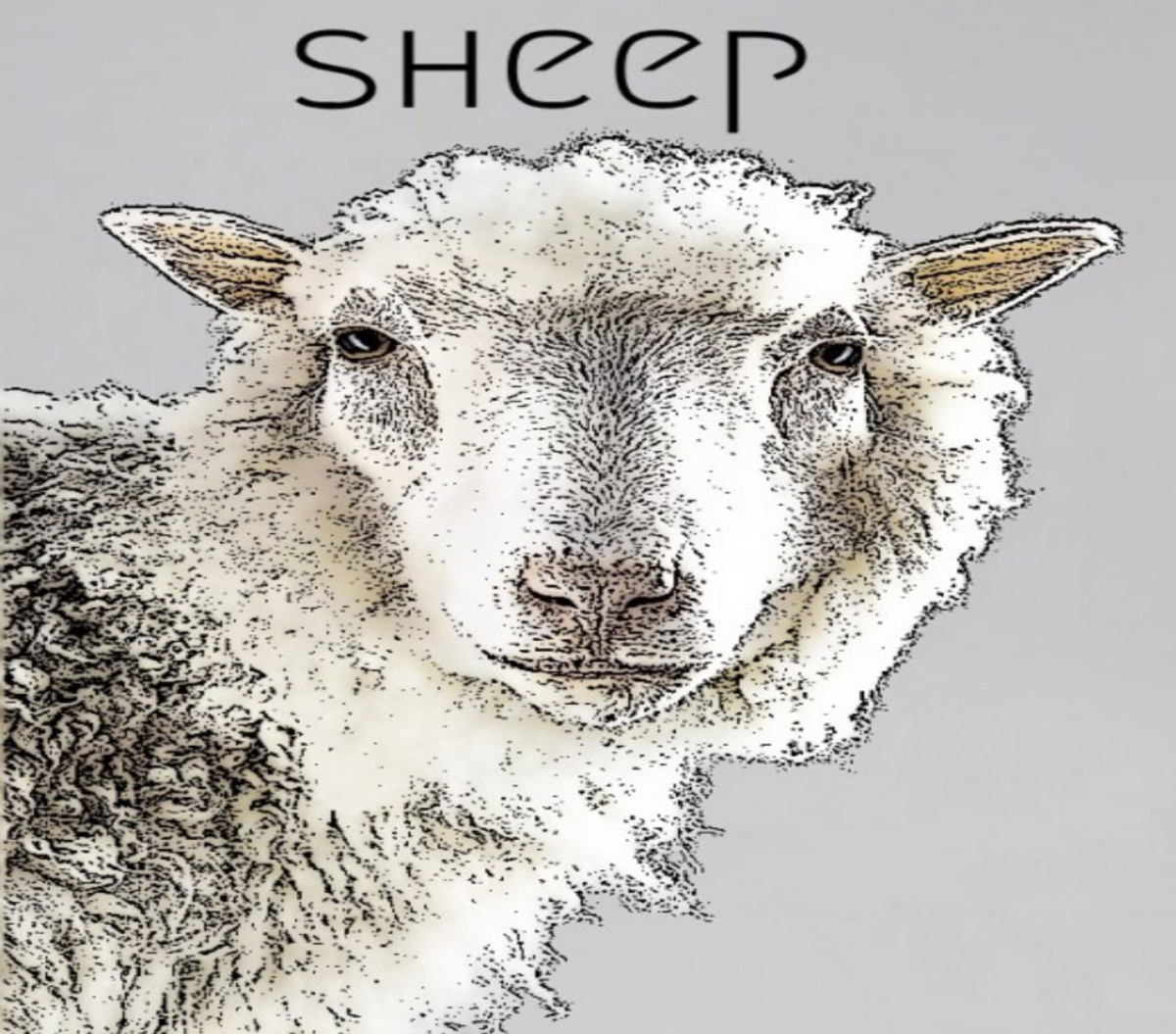 Year of the Sheep 2021