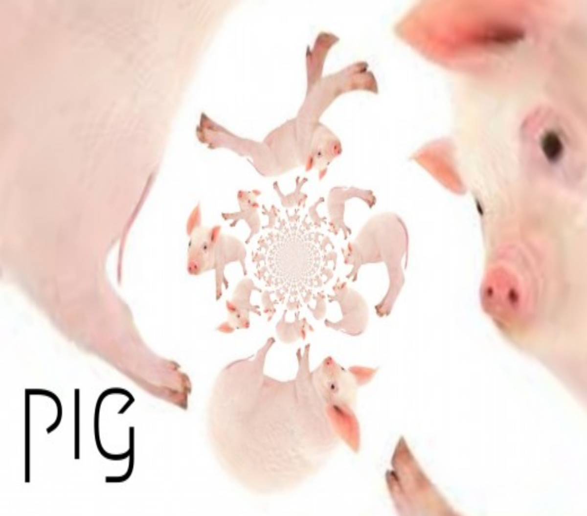 Year of the Pig 2021