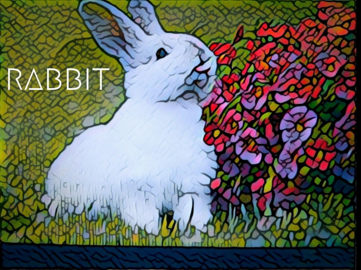 Year of the Rabbit 2021