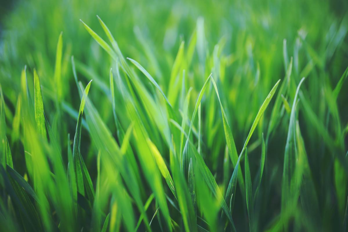 Fresh green grass, nutrition and anti-acid combo for your dog