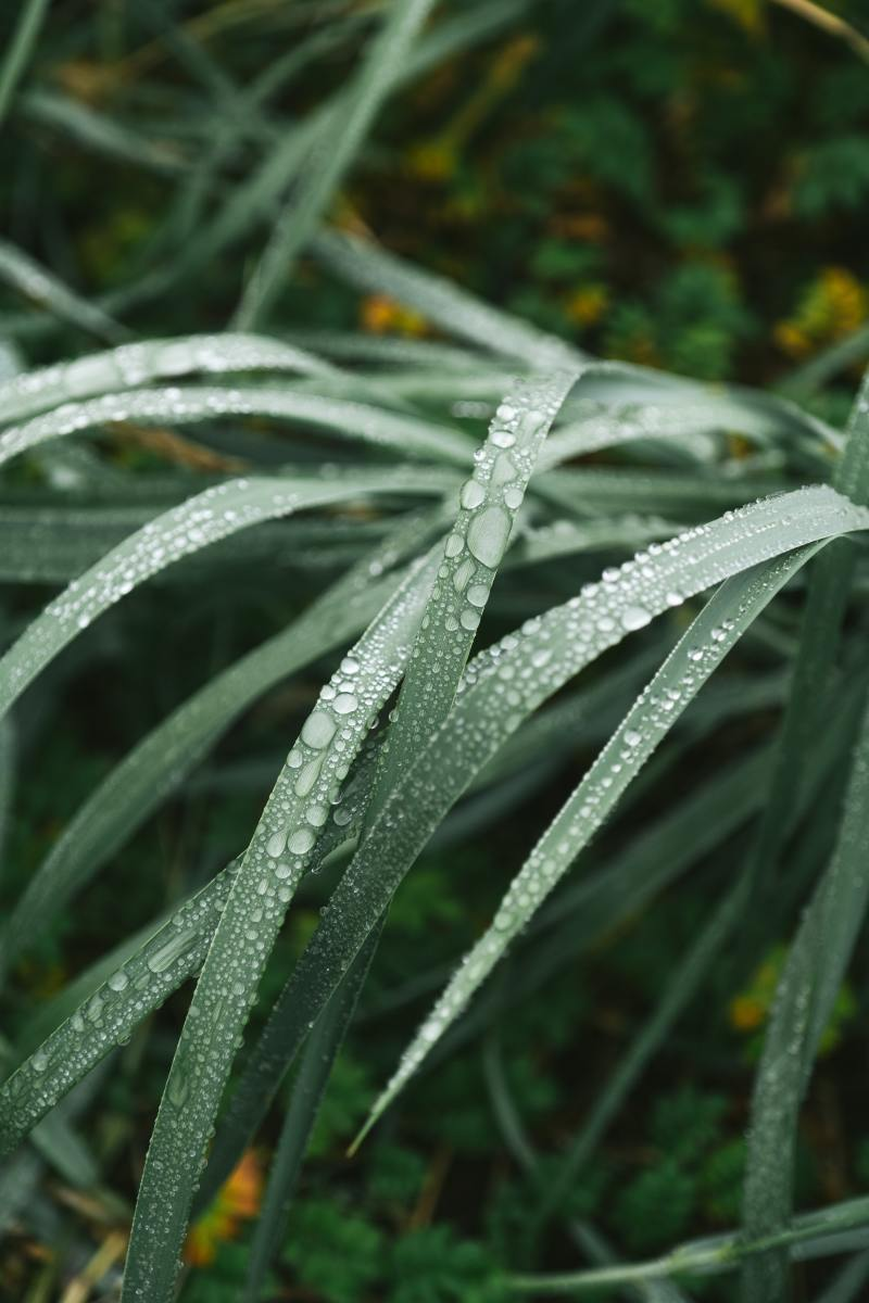 Look at these fresh, dewy blades of grass? How is that not appealing?