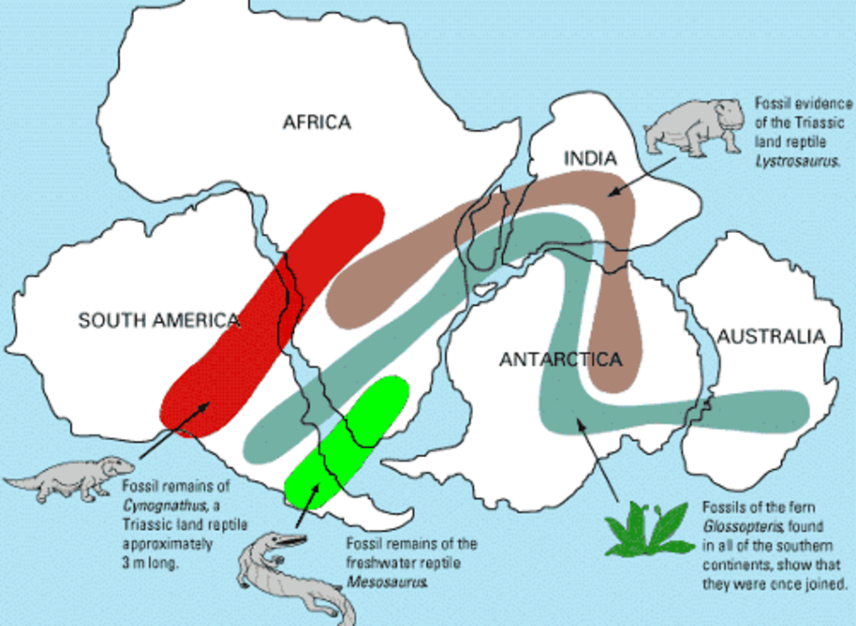Map of Fossils on Pagea Contient