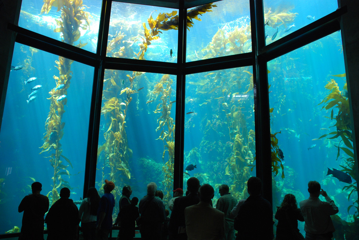 Visit The Monterey Bay Aquarium