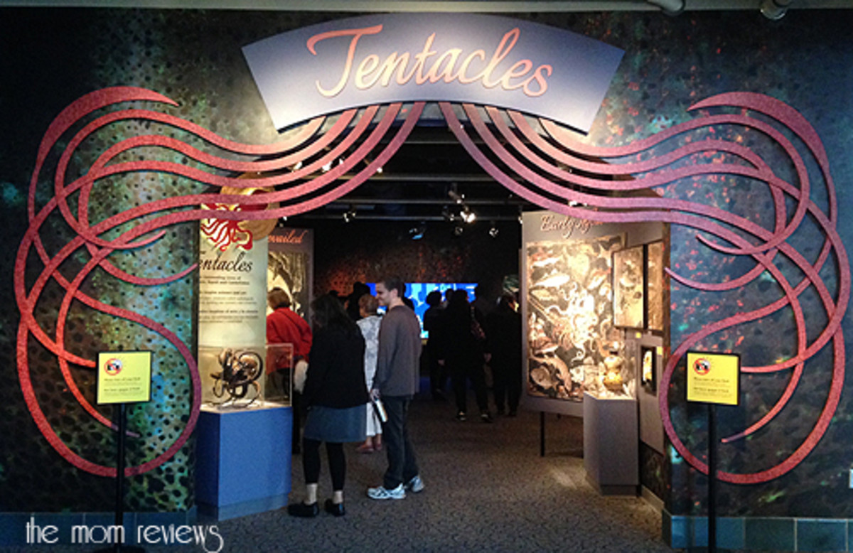 Tentacles Exhibit At Monterey Bay Aquarium