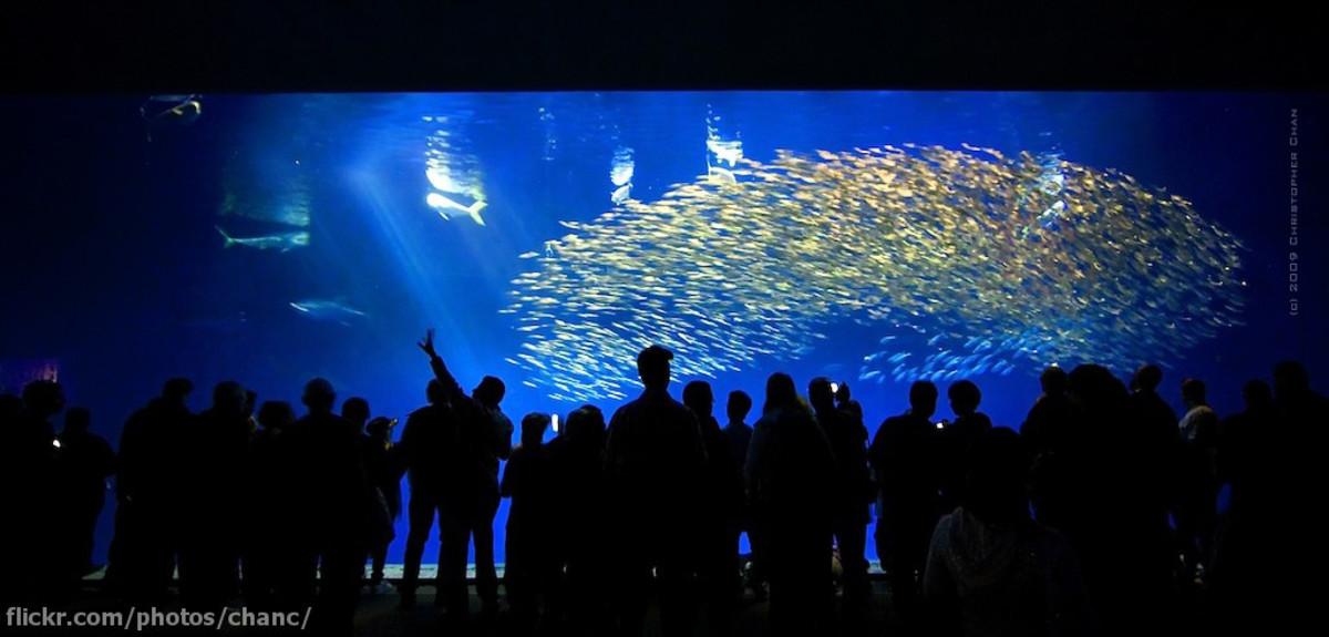Open Sea Gallery At Monterey Bay Aquarium