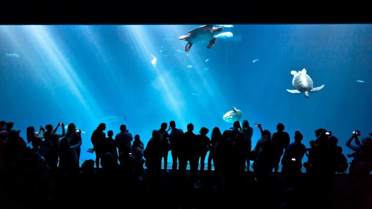 Exhibit At Monterey Bay Aquarium