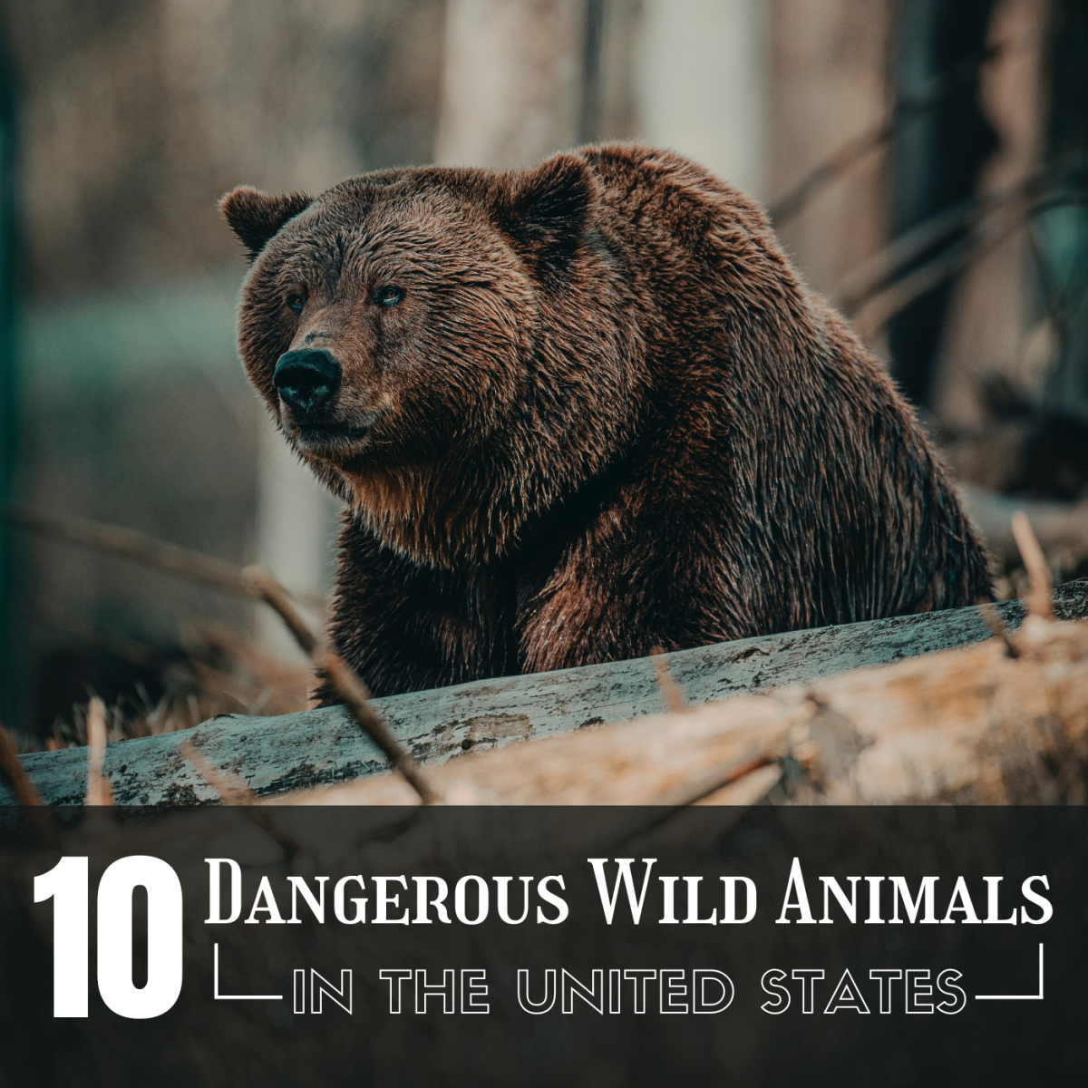 The Top 10 Most Dangerous Wild Animals in the U.S.A.