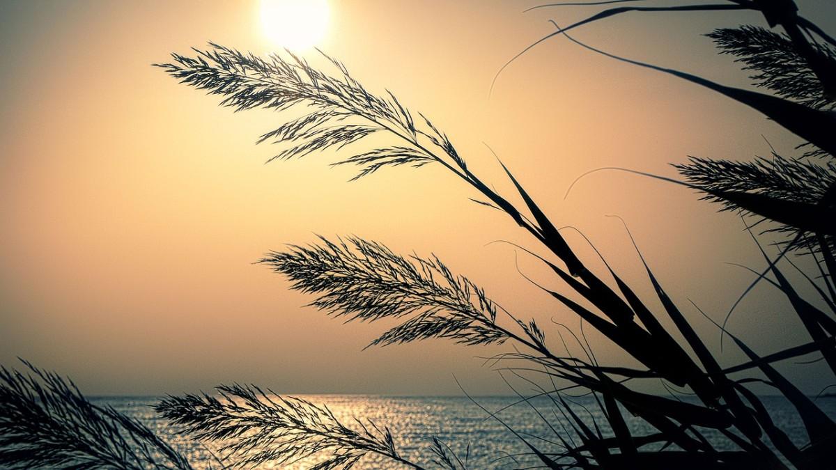 cultivating-beauty-through-gratitude