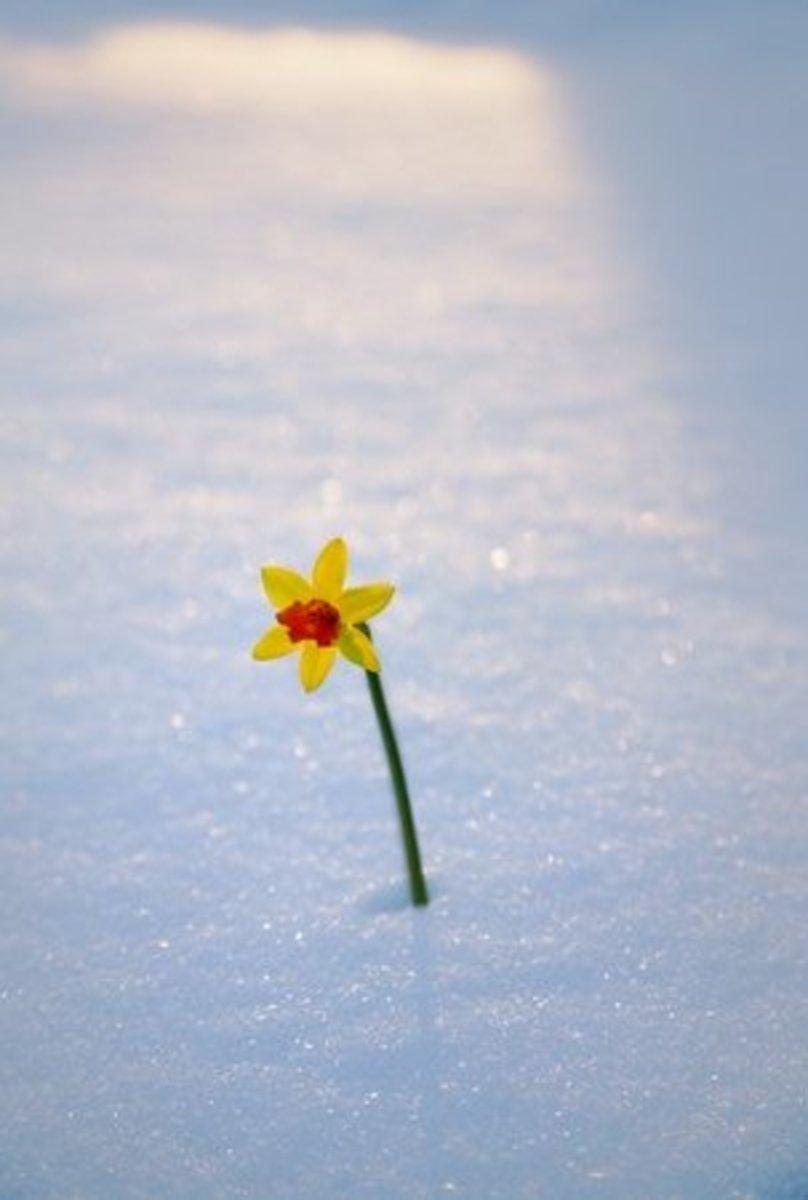 winters-fall-a-poem