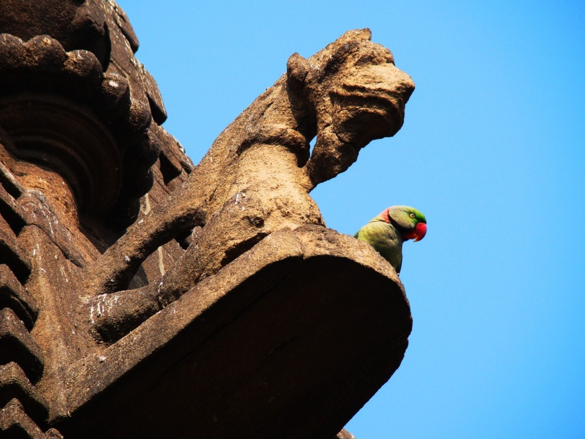 A real parakeet on the temple no. 3!