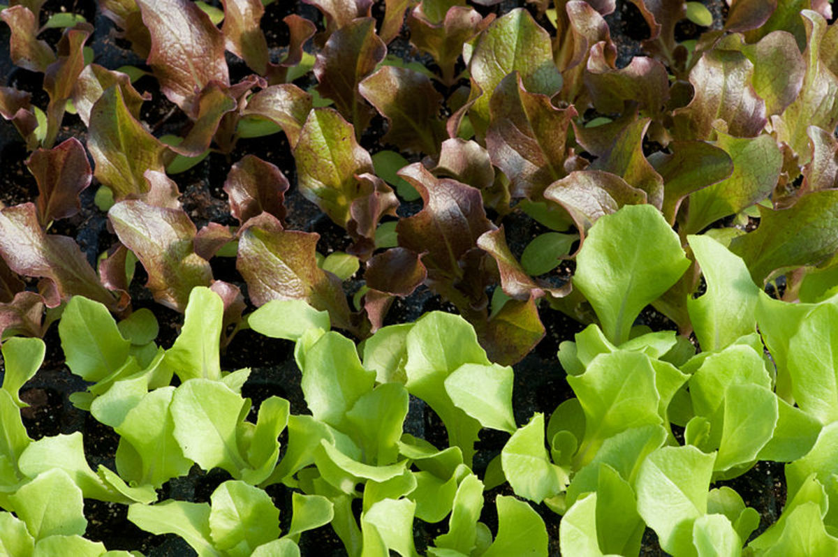 Getting Seeds to Germinate for Your Fall Garden