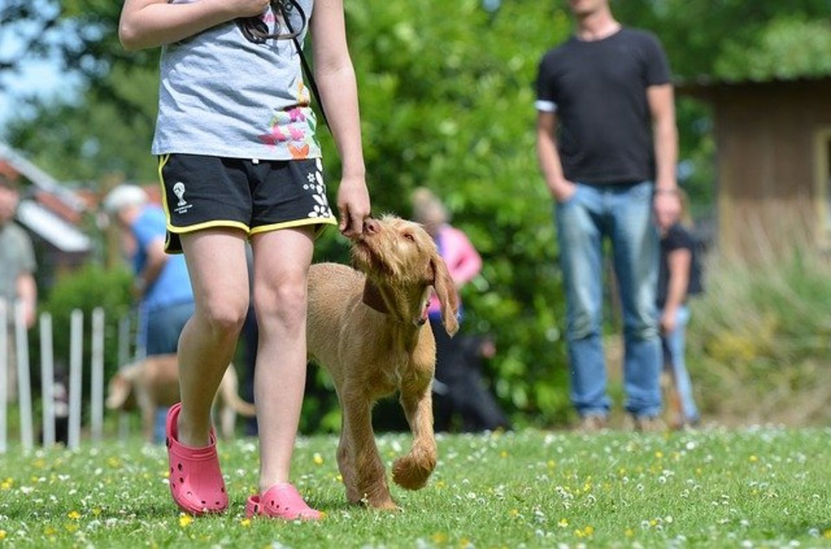 tricks-for-training-your-dog