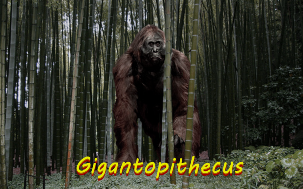 The Gigantopithecus is a massive Asian primate that many people believe inspired folklore like Bigfoot and the Yeti.