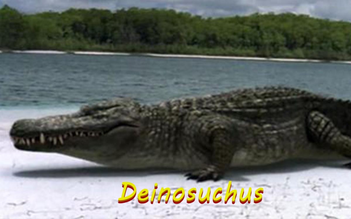 The Deinoshuchus is a terrifyingly large crocodilian that lived during the Cretaceous period.
