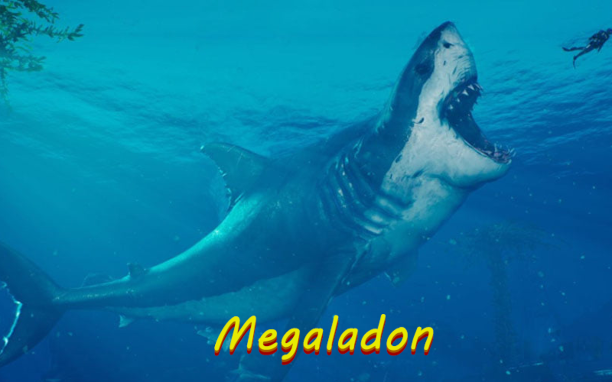 The Megaladon is the largest shark to have ever existed.