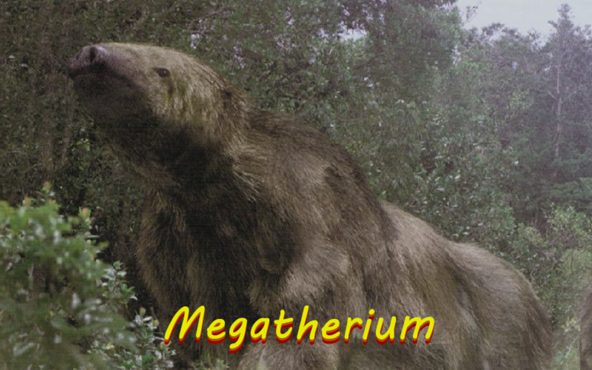 Compared to the sloths of today, the Megatherium was a real giant.