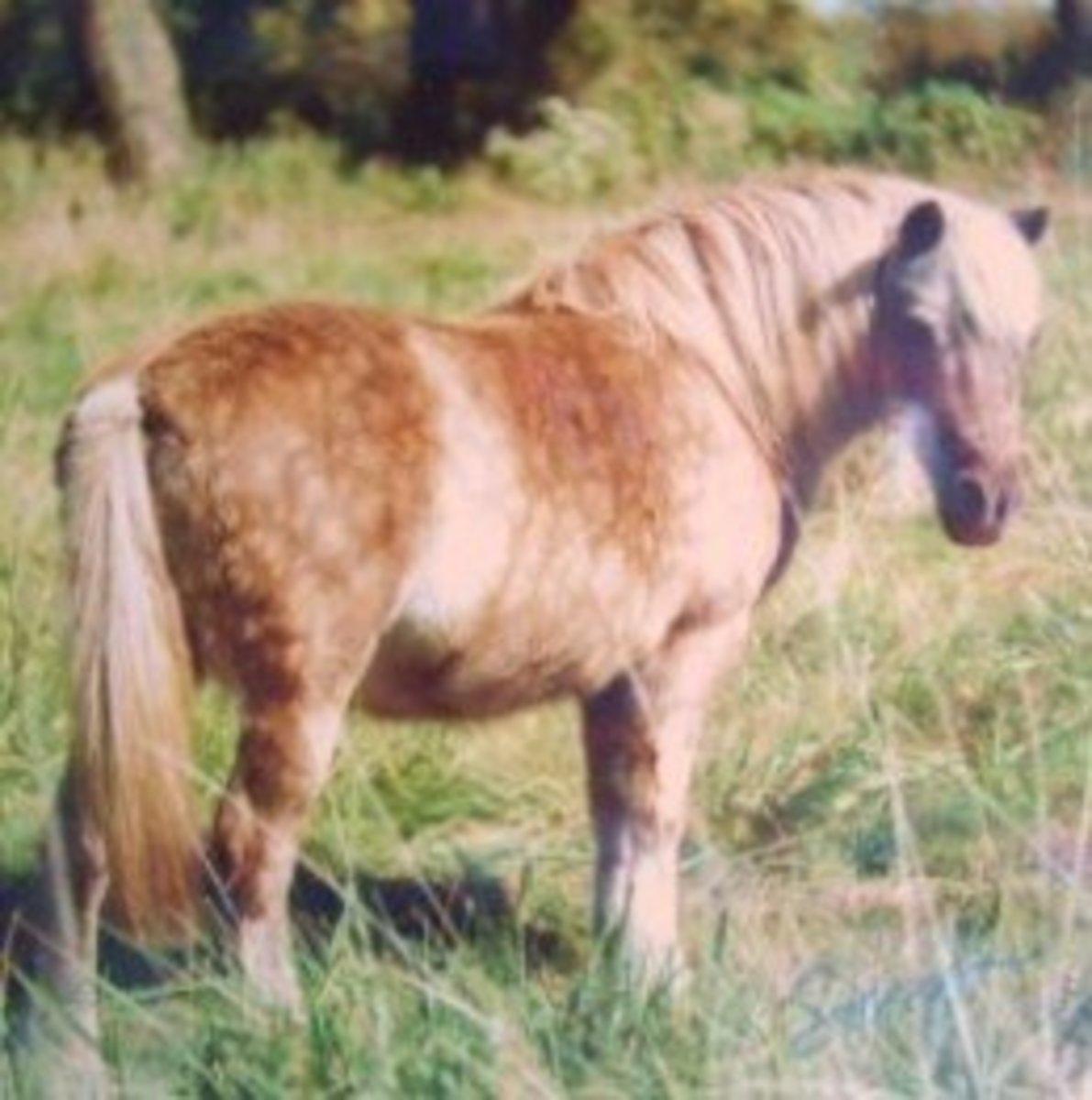 Princess Our Pony