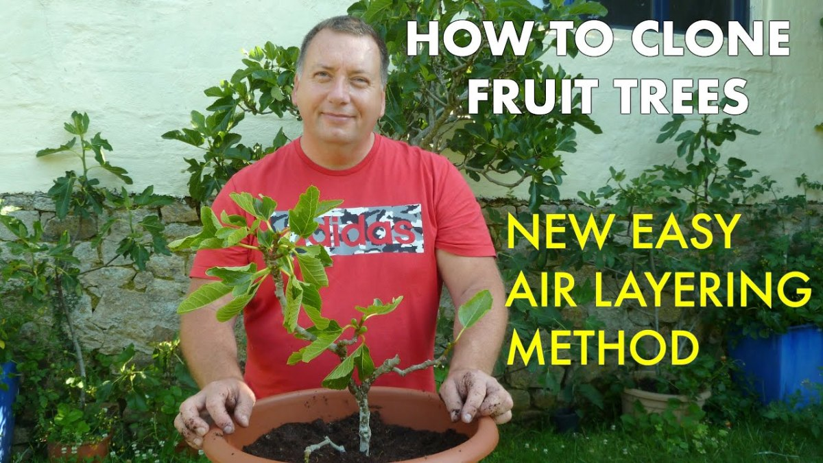 How to Clone Fruit Trees With the Air Layering Method