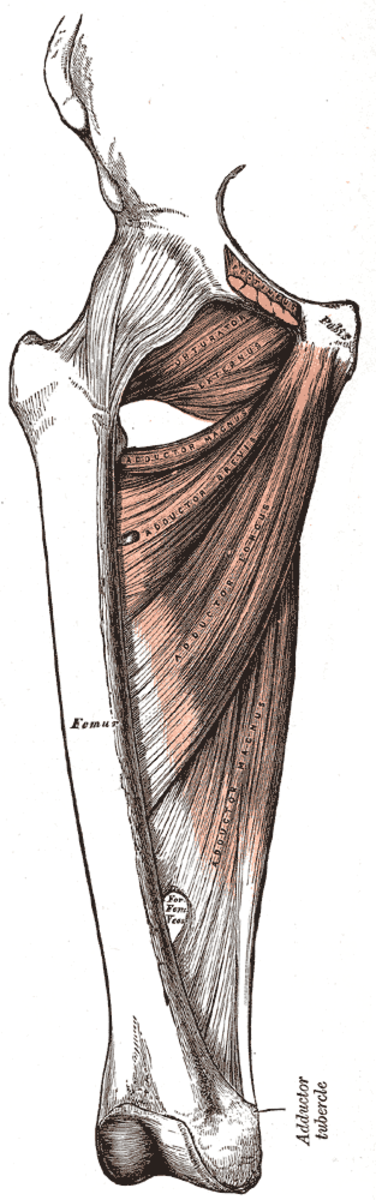 human-anatomy-lesson-25