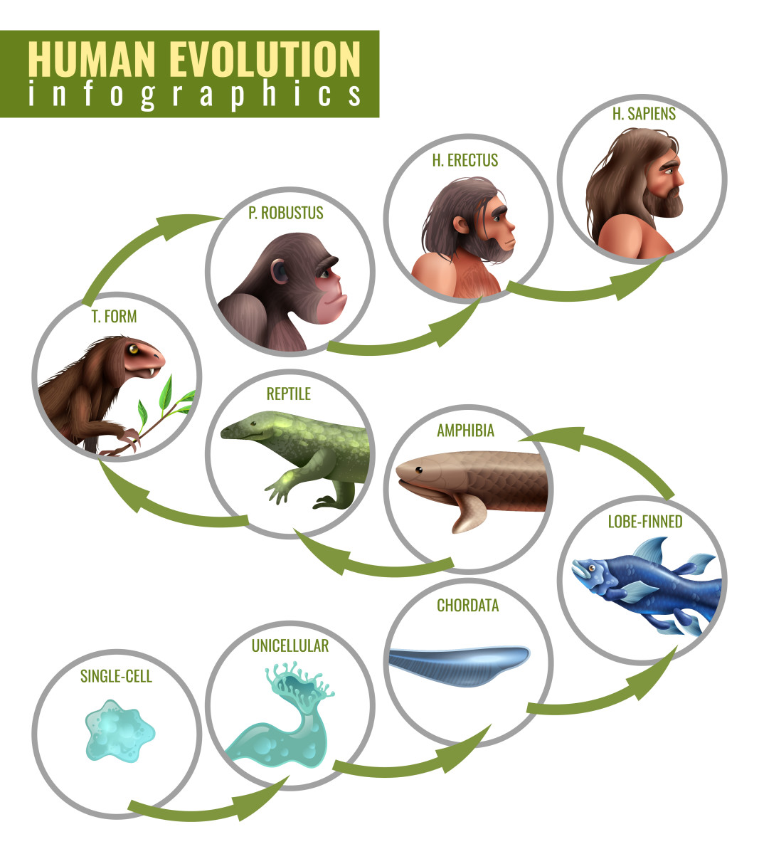Humans Evolved from Four-Legged Creatures Similar to Squirrels
