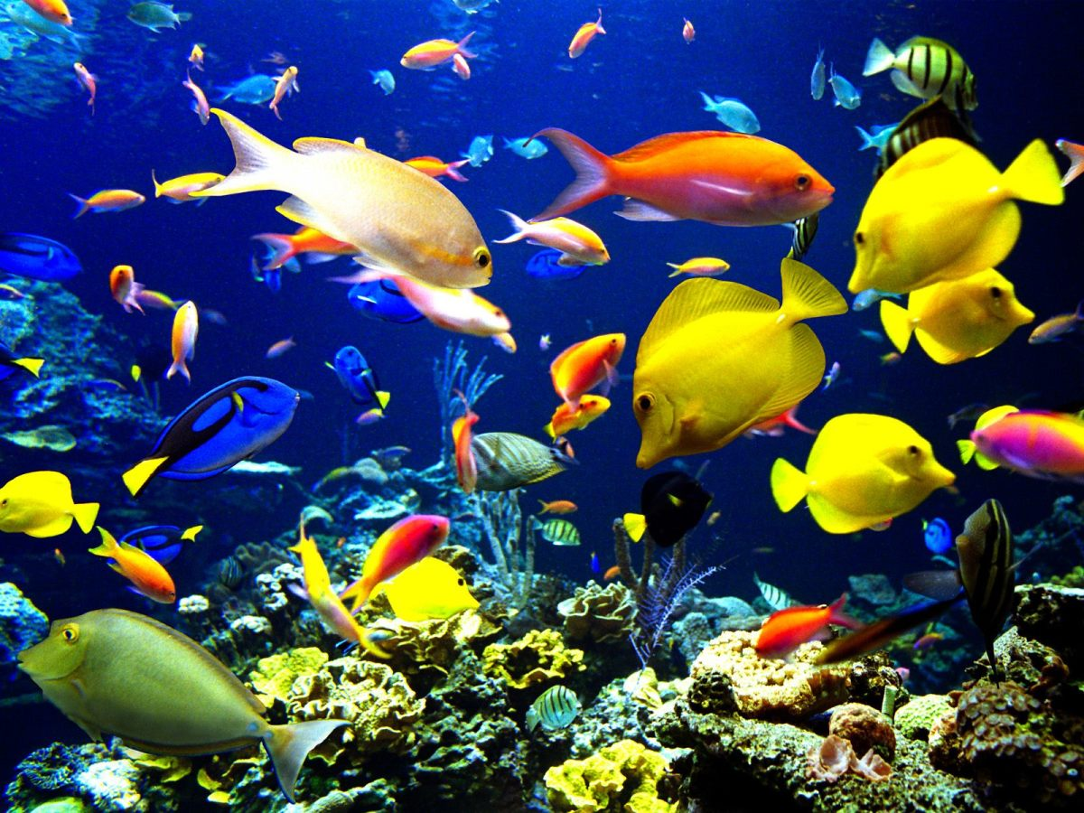 save-our-coral-reefs