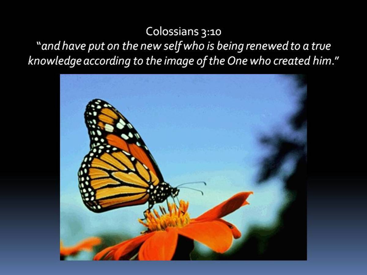Colossians 3:10
