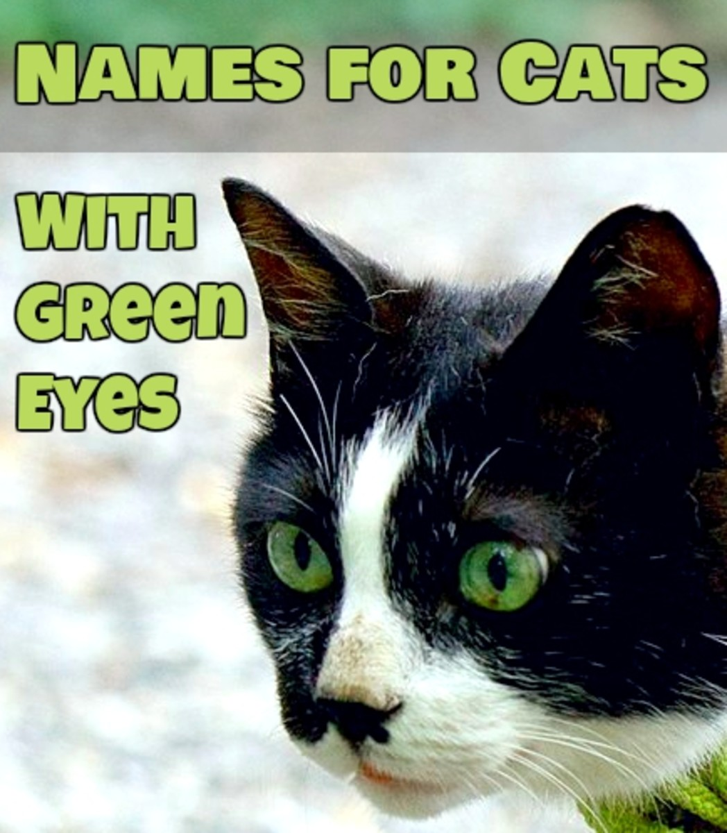 Names for Green-eyed Cats!