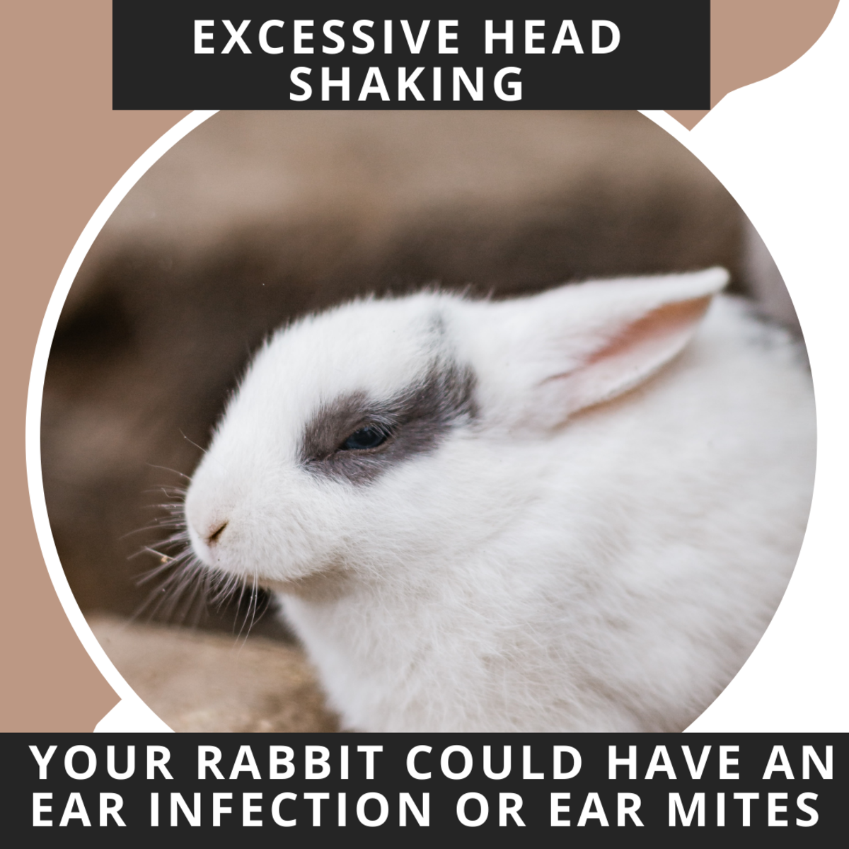 Bunny rabbits don't have any way of telling you they are sick. You have to be an attentive owner and watch their behaviour.