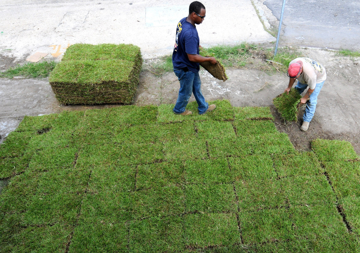 A Simple Guide to Laying Sod (With Video Tutorials) | Dengarden