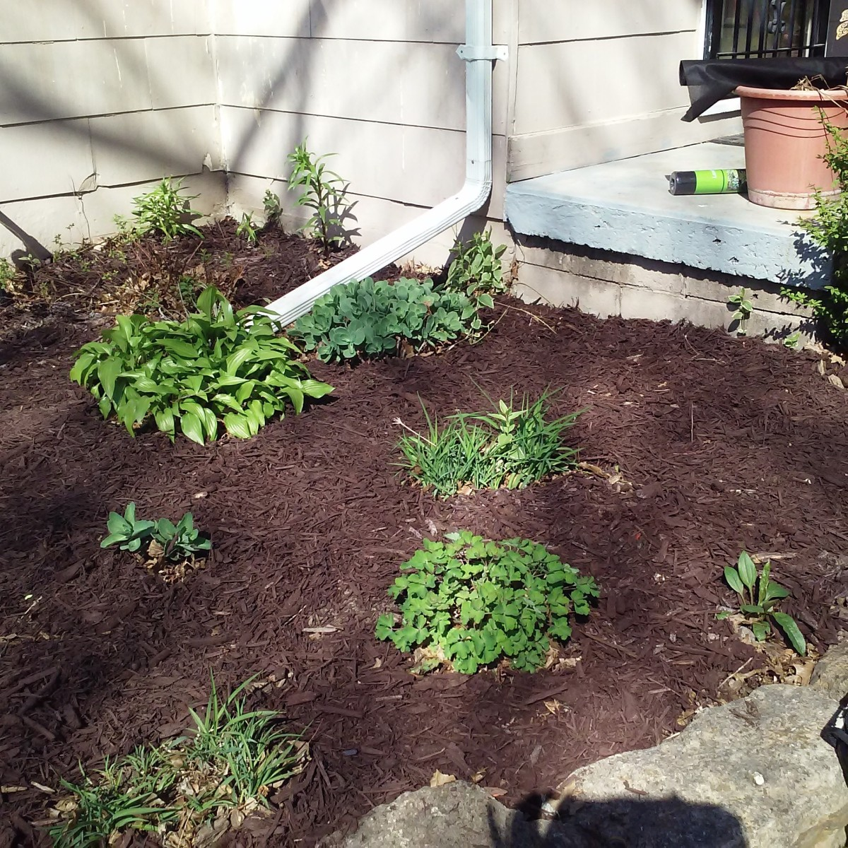Weeded and mulched flower bed adjoining the house.