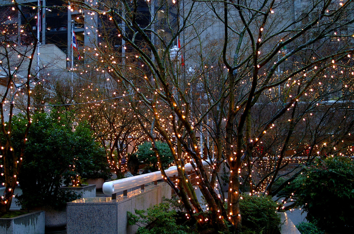 Stringing Outdoor Tree Lights