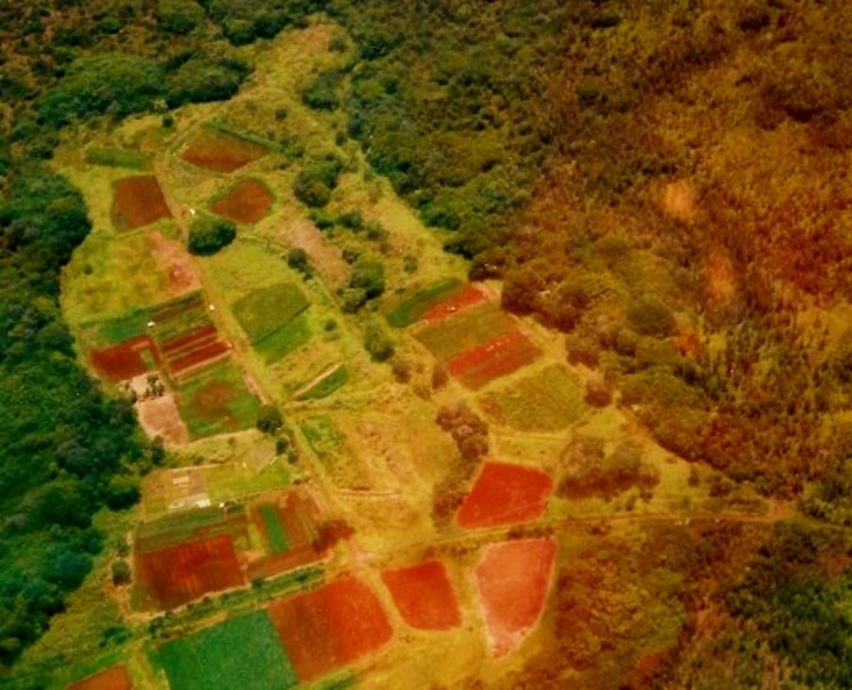 Lush farmland on Hilo side of the Big Island of Hawaii