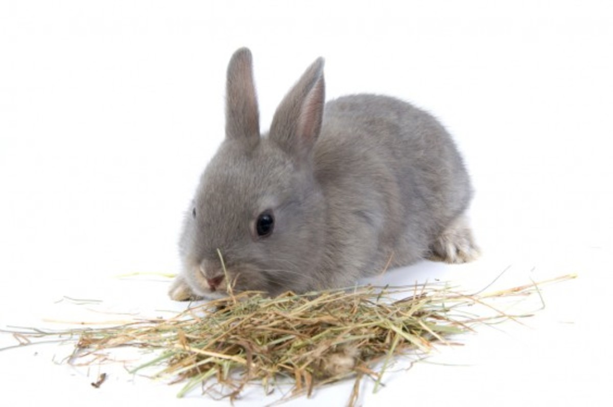 When To Introduce Food To Baby Rabbits