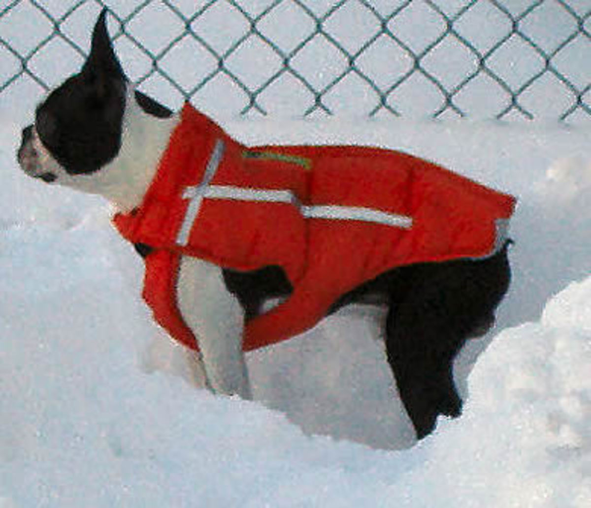 Booker in his Chillybuddy Winter Jacket