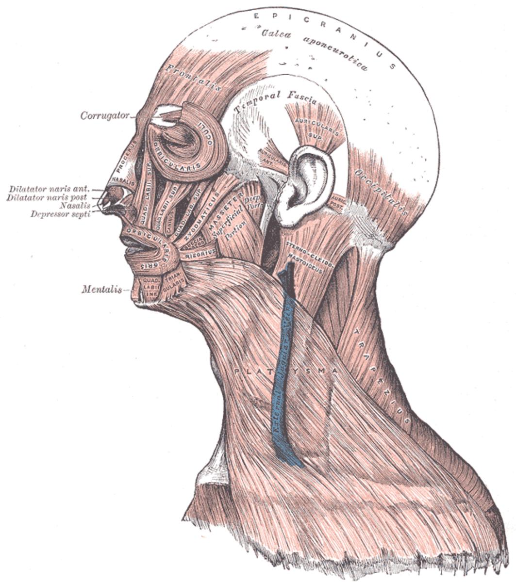 human-anatomy-lesson-13