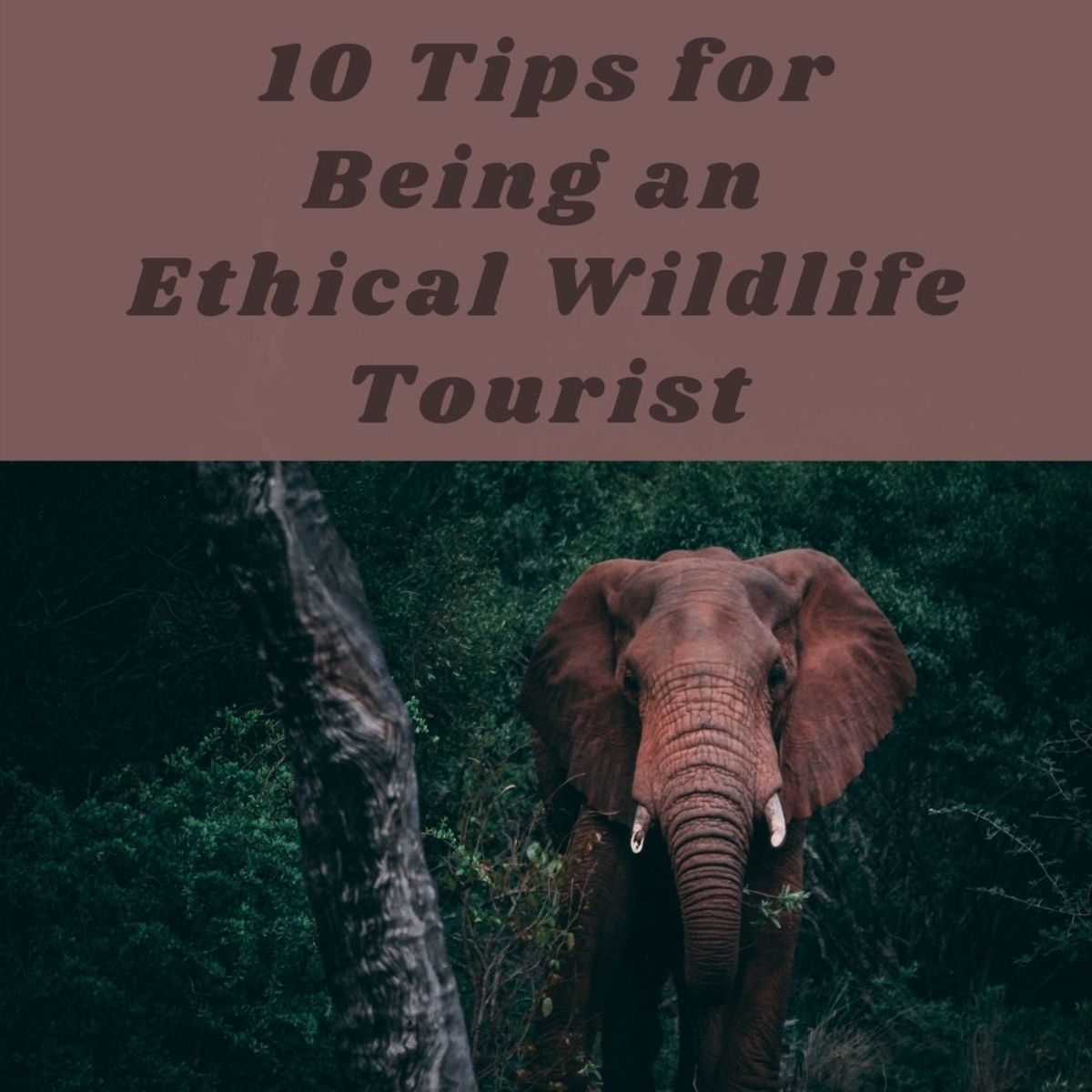 Here are some things you should consider before heading off to your next exotic wildlife tourism experience.