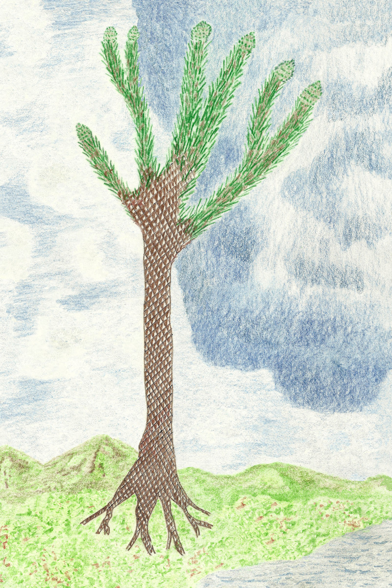 """Lycopod Scale Tree """"Lepidodendron"""" Drawing"""