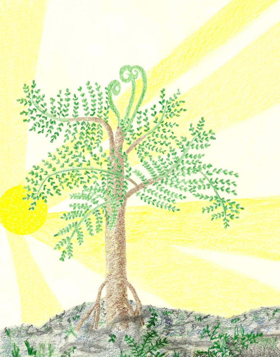 PSARONIUS TREE