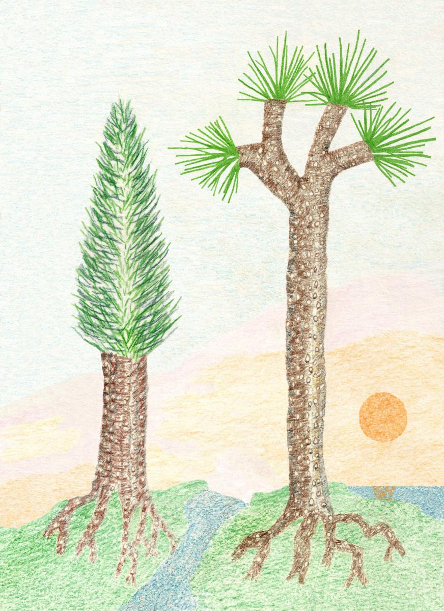 "Lycopod Scale Tree ""Sigillarias"" Drawing"