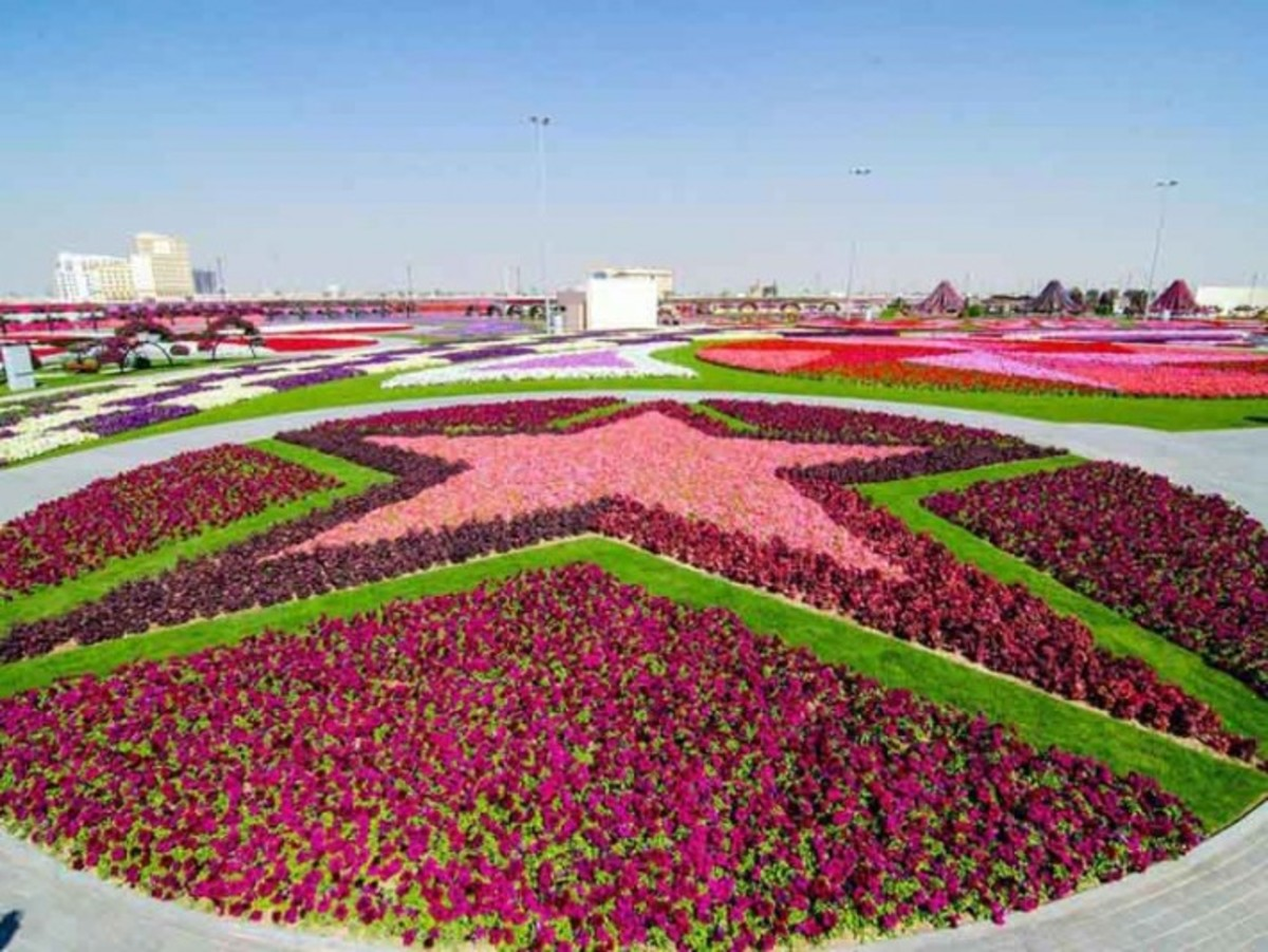 star shaped flower beds