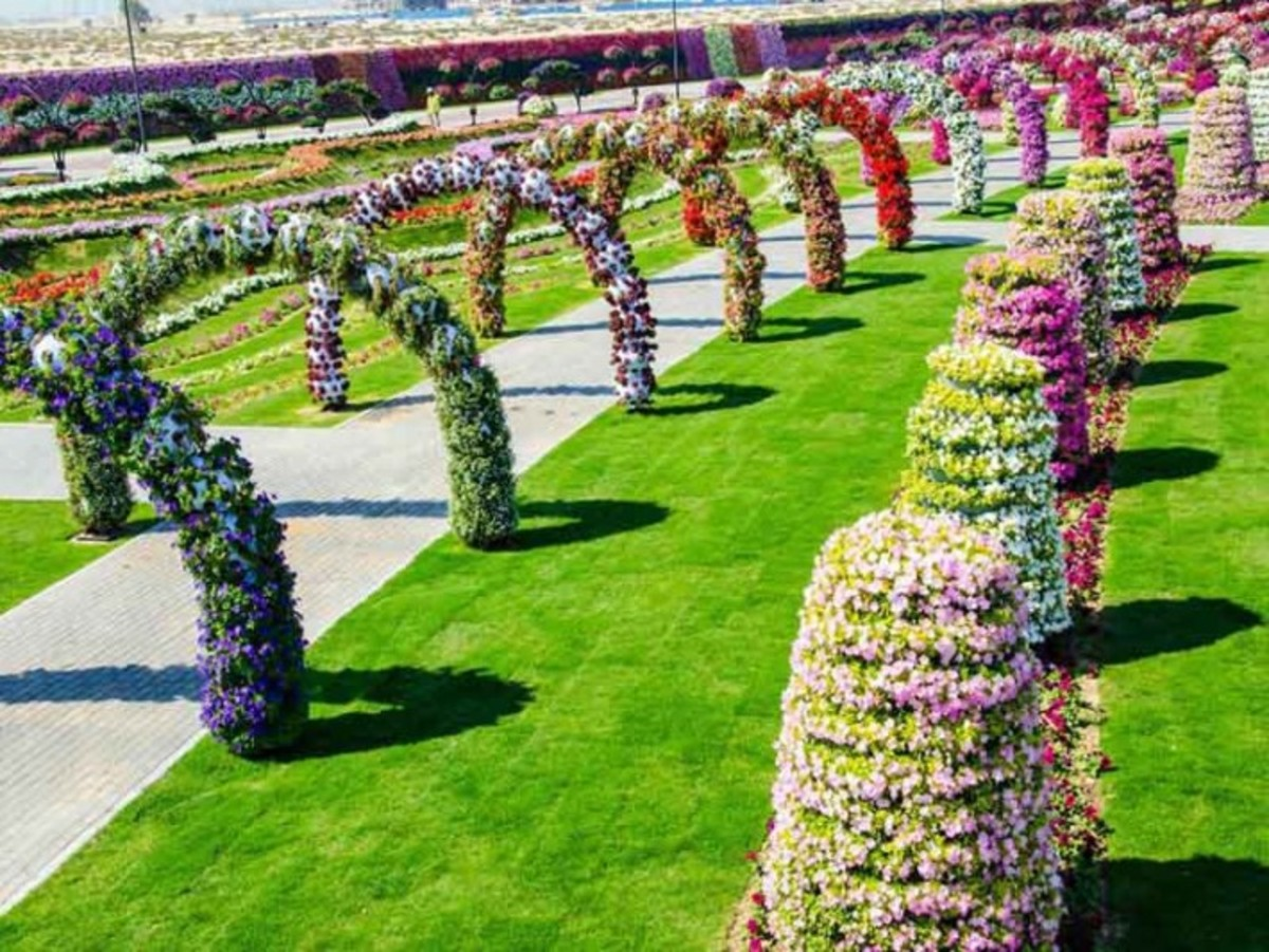 Things to do in Dubai - A Visit to the Miracle Garden