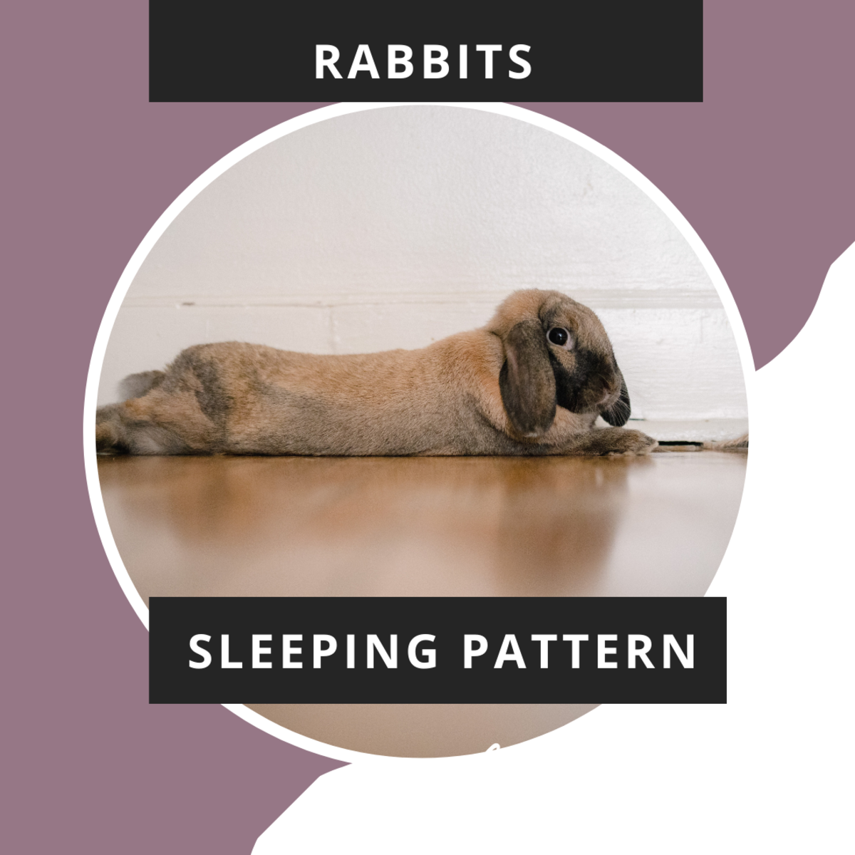 Why Rabbits Grind Their Teeth and Breathe Heavily During Sleep