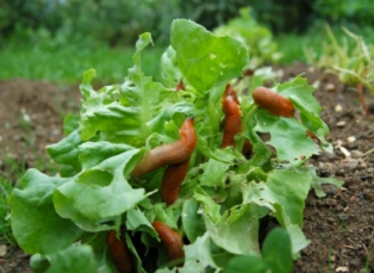 How to make organic pesticides for your garden