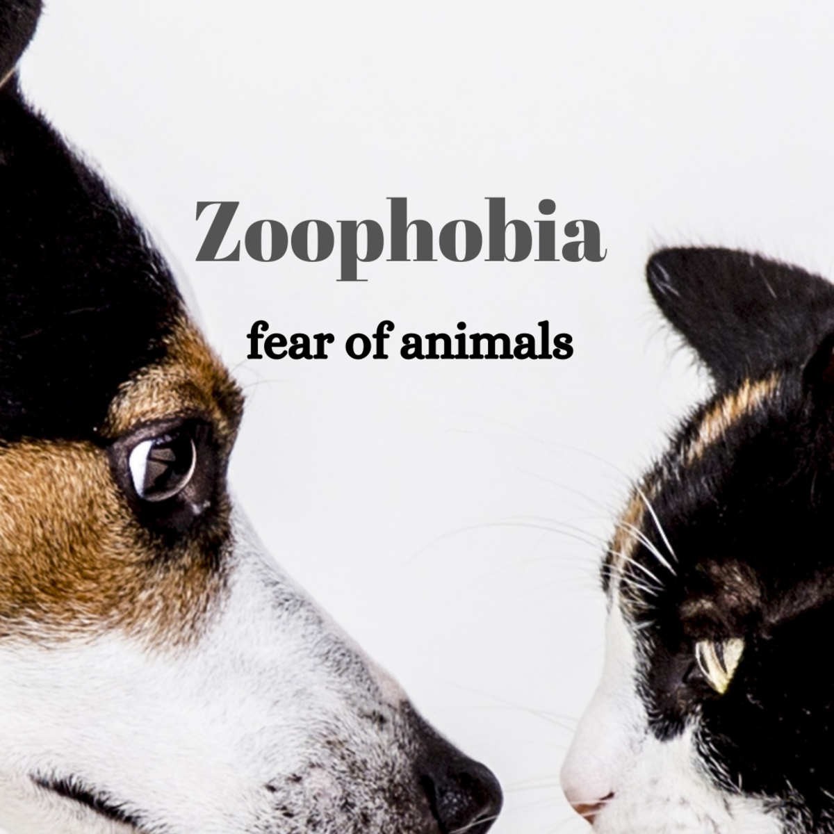 Zoophobia, a fear of animals