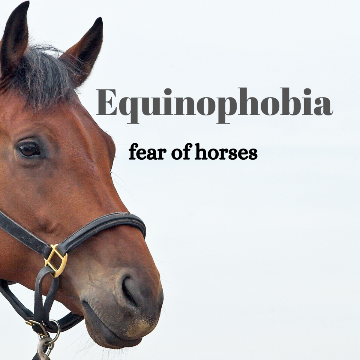 Equinophobia, a fear of horses
