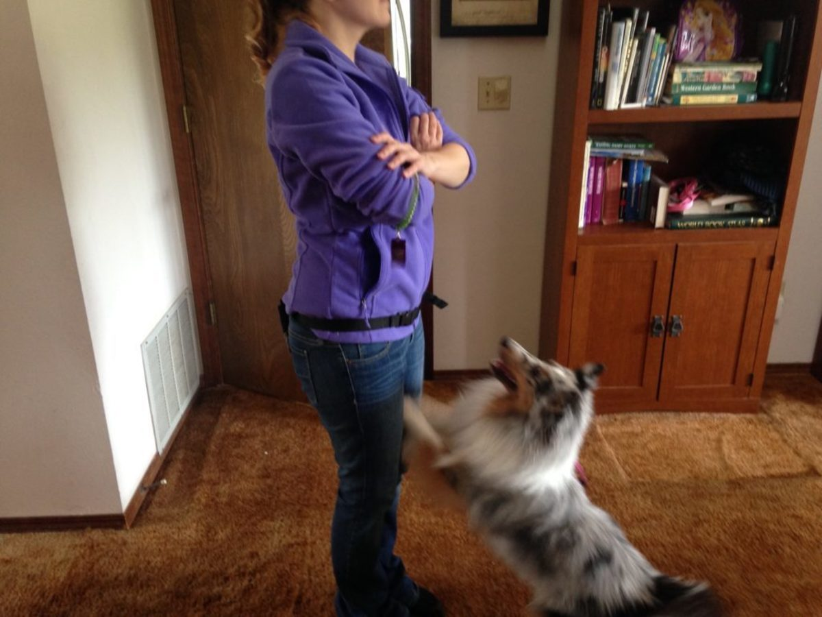 Figure 3. Trainer representing how to ignore a dog.